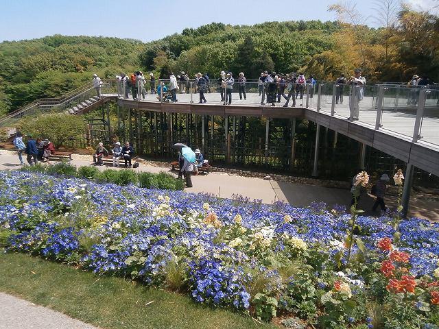 Fwd: 公開講座4月28日「春爛漫の三園・花めぐり」報告